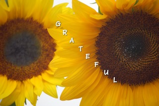be grateful for sunflowers ...