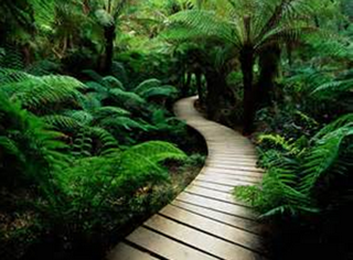 This is a path I would like to walk … peaceful … heading in the perfect direction