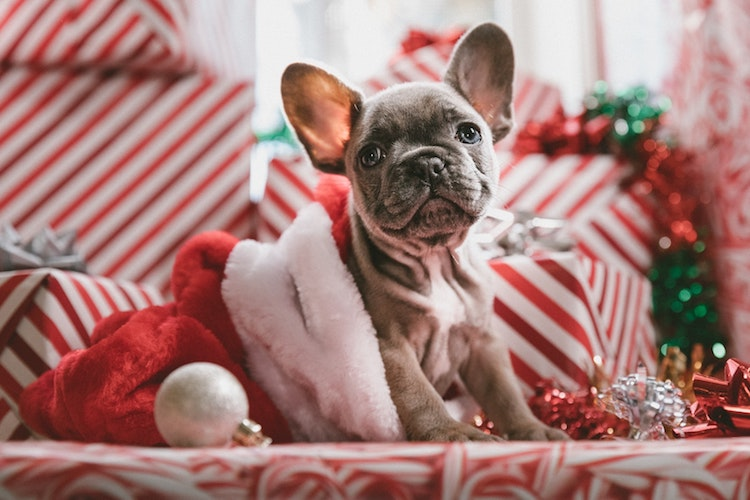 The 22 Best Christmas Quotes