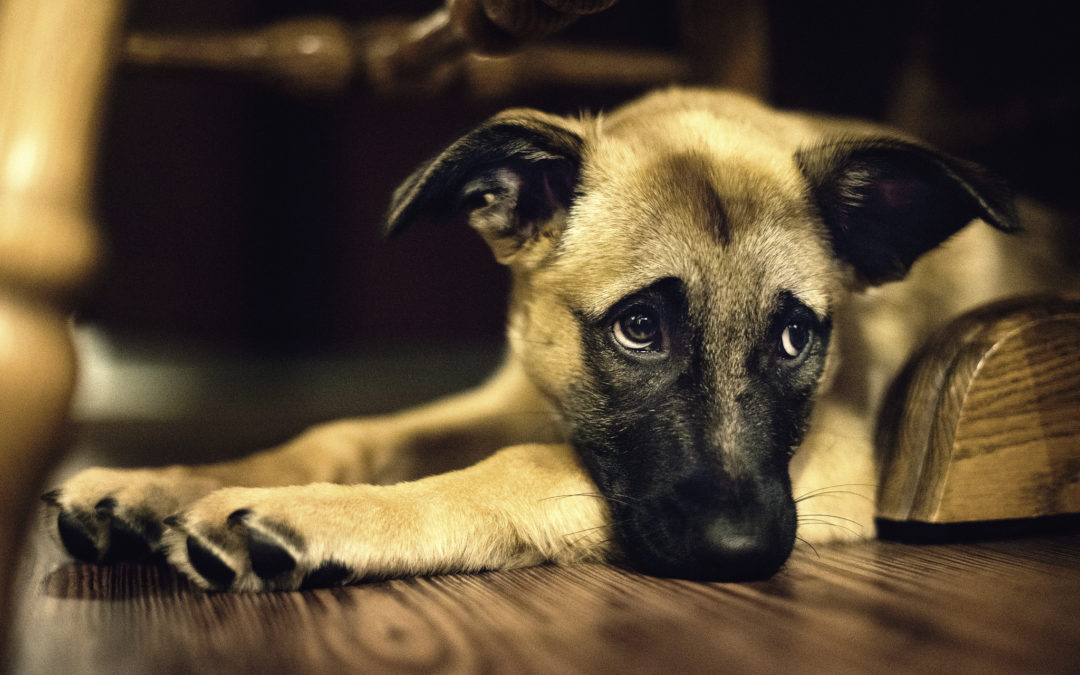 How to Overcome Grief and Loss of a Pet